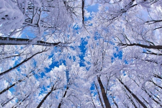 Winter Trees - Obrázkek zdarma pro HTC Hero