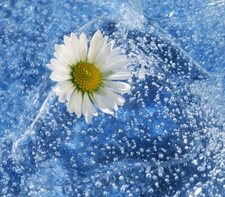 Chamomile And Water - Obrázkek zdarma pro iPad mini