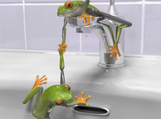 Froggy - Obrázkek zdarma pro LG P970 Optimus