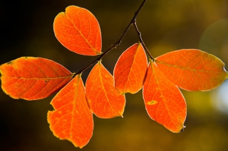 Bright Autumn Orange Leaves Background for Android, iPhone and iPad