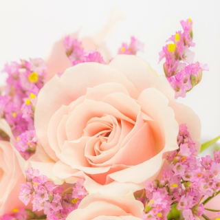 Pink rose bud - Obrázkek zdarma pro iPad