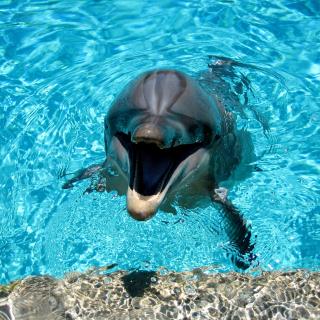 Dolphin Smile - Obrázkek zdarma pro 320x320