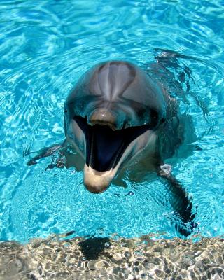 Dolphin Smile - Obrázkek zdarma pro Nokia Lumia 1520