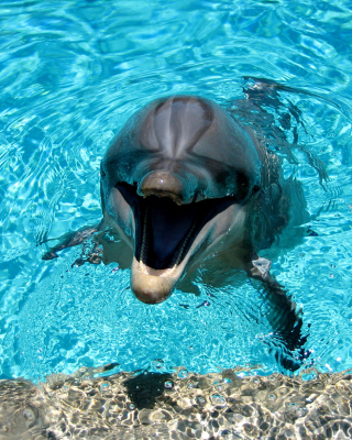 Dolphin Smile - Obrázkek zdarma pro Nokia Asha 202