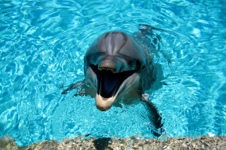 Dolphin Smile - Obrázkek zdarma pro 1366x768