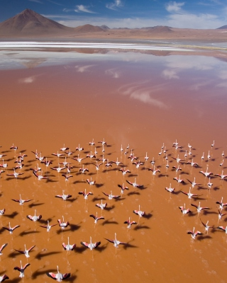 Flamingo - Obrázkek zdarma pro Nokia X1-01