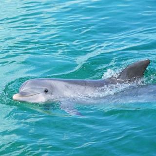 Cute Dolphin - Obrázkek zdarma pro iPad mini