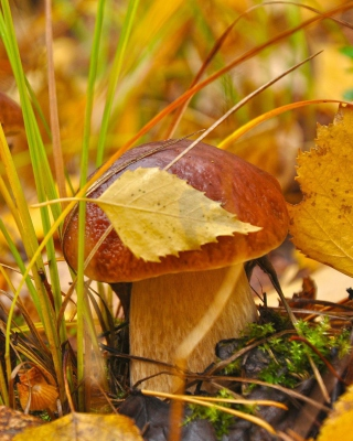 Autumn Mushrooms with Yellow Leaves - Obrázkek zdarma pro Nokia Asha 503