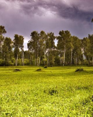 Birch Forest - Obrázkek zdarma pro Nokia Asha 306