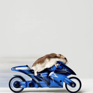 Mouse On Bike - Obrázkek zdarma pro 320x320