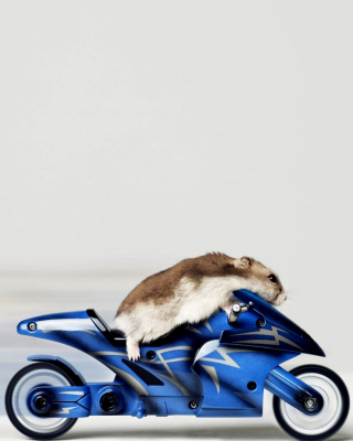 Mouse On Bike - Obrázkek zdarma pro 480x854