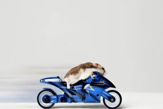 Mouse On Bike - Obrázkek zdarma pro Desktop 1280x720 HDTV