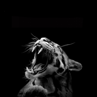 Roaring Cat - Obrázkek zdarma pro iPad Air