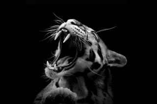 Roaring Cat - Obrázkek zdarma pro 1366x768
