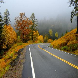 Autumn Sodden Road - Obrázkek zdarma pro 320x320