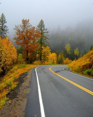 Autumn Sodden Road - Obrázkek zdarma pro 352x416