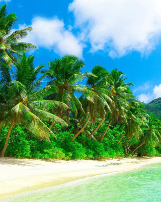 Tropical Landscape and Lagoon HD - Obrázkek zdarma pro iPhone 4S