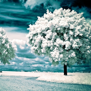 Infrared Trees - Obrázkek zdarma pro iPad mini 2