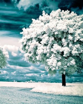 Infrared Trees - Obrázkek zdarma pro Nokia Asha 502