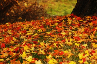 Red And Yellow Autumn Leaves Picture for Android, iPhone and iPad