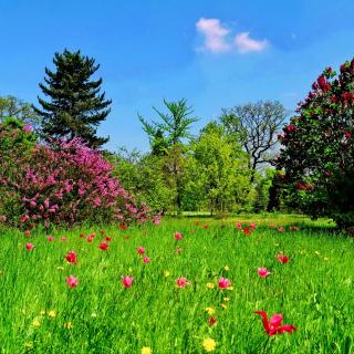 Green Lawn - Obrázkek zdarma pro 2048x2048