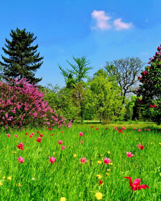 Green Lawn - Obrázkek zdarma pro iPhone 3G