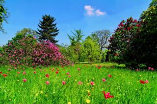 Green Lawn - Obrázkek zdarma pro Fullscreen Desktop 800x600