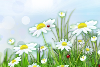 Chamomile And Ladybug - Obrázkek zdarma pro 1280x720