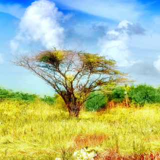 Savanna in Namibia - Obrázkek zdarma pro iPad 2