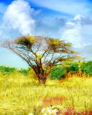 Savanna in Namibia - Obrázkek zdarma pro Nokia Asha 308