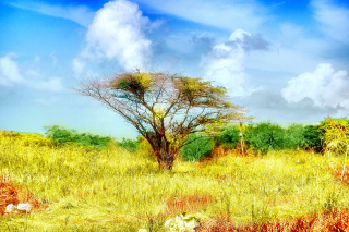 Savanna in Namibia Background for Android, iPhone and iPad