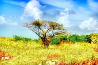 Savanna in Namibia - Obrázkek zdarma pro Sony Xperia Z2 Tablet
