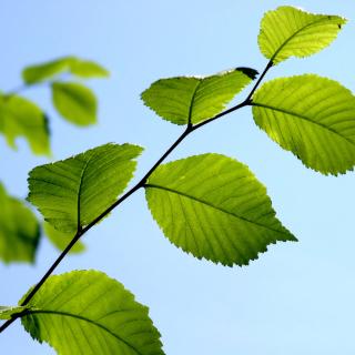 Green Leaf - Obrázkek zdarma pro 2048x2048