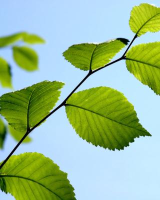 Green Leaf - Obrázkek zdarma pro 1080x1920