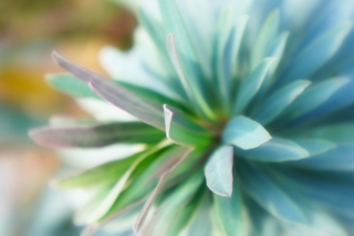 Teal Flower Background for Android, iPhone and iPad