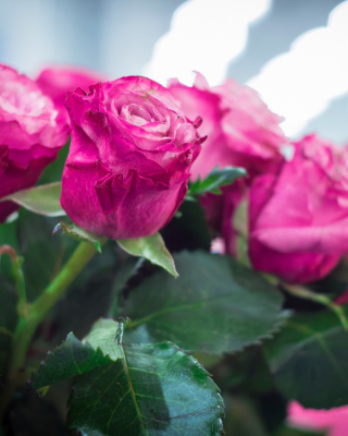 Pink Roses Bokeh - Obrázkek zdarma pro Nokia Lumia 800
