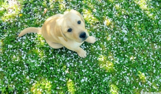 Dog On Green Grass Wallpaper for Android, iPhone and iPad