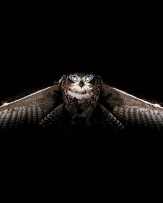 Owl - Obrázkek zdarma pro Nokia X3-02