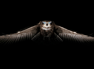 Owl Picture for Android, iPhone and iPad