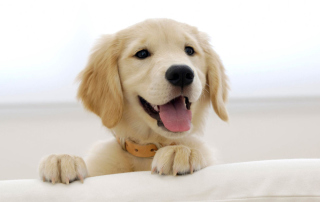 Обои Cute Smiling Puppy на Android