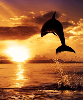 Dolphin - Obrázkek zdarma pro Nokia Asha 300