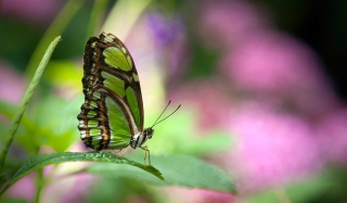 Green Butterfly Background for Android, iPhone and iPad