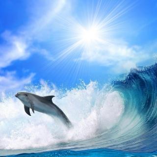 Dolphin - Obrázkek zdarma pro iPad mini
