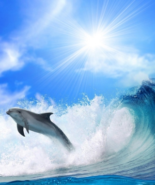 Dolphin - Obrázkek zdarma pro Nokia Asha 202