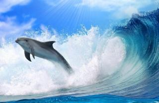 Dolphin - Obrázkek zdarma pro 2880x1920