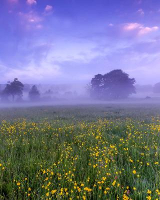 England Glade - Obrázkek zdarma pro 750x1334