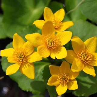 Yellow Flowers - Obrázkek zdarma pro 208x208