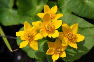 Yellow Flowers - Obrázkek zdarma pro Fullscreen Desktop 1400x1050