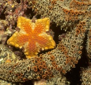 Octopus In Ocean - Obrázkek zdarma pro iPad