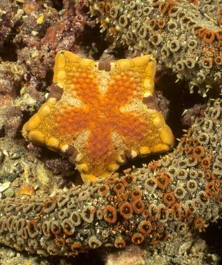 Octopus In Ocean - Obrázkek zdarma pro Nokia C2-06